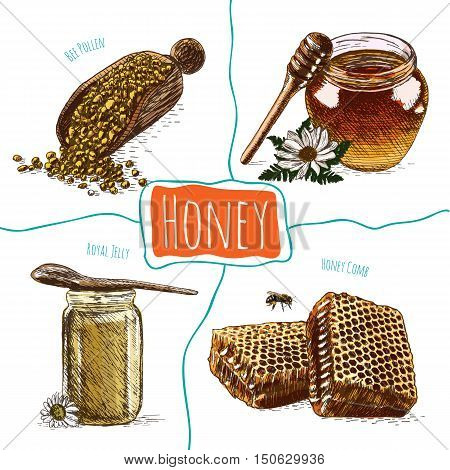 Royal jelly bee pollen honey comb and honey colorful illustration. Vector colorful illustration of honey