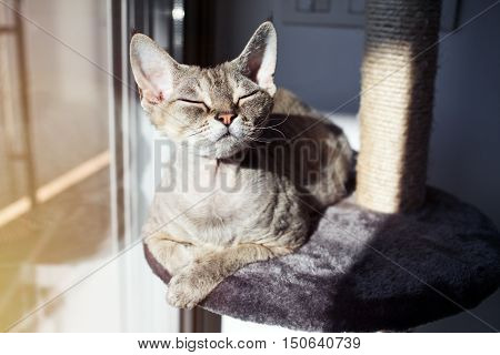Cat loves to spend time and sit down on scratching post with lounge space. Multi Platform Cat Scratcher. Cat enjoys having sun baths. Cat furniture - scratcher. Cat sits with closed eyes and relaxing