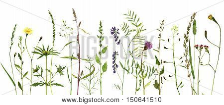 Watercolor drawing wild flowers and herbs, painted wild plants, botanical illustration in vintage style, color floral background, hand drawn natural template, decorative herbal border