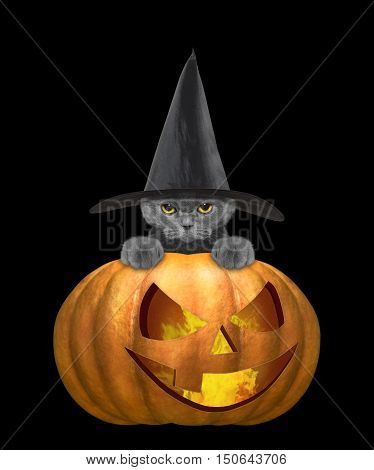 Cute cat in a costume with halloweens pumpkin -- isolated on black