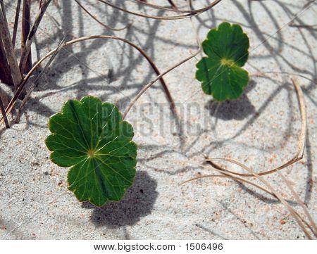 Irish Grasses