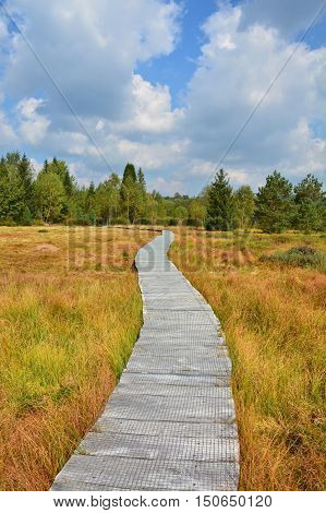 Wood Path Through The Peat Bog