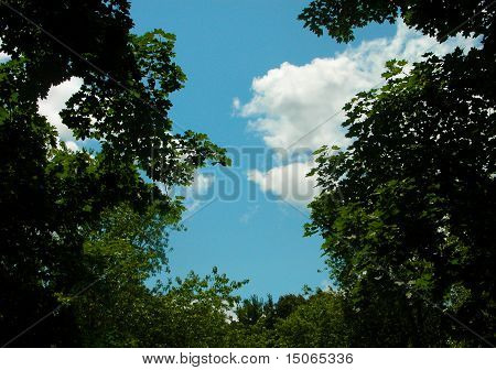 Blue Sky With Green Trees