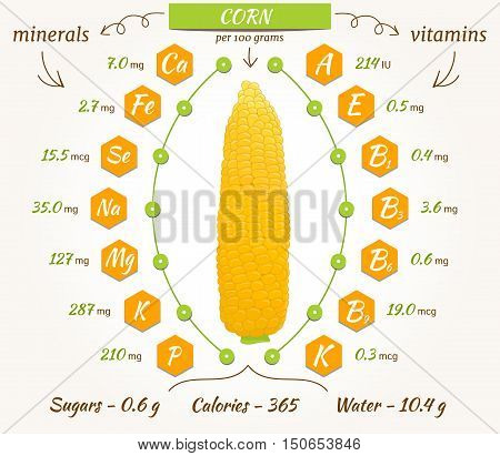 Corn infographics nutrition facts calories and analysis. Vector illustration. The content of minerals and vitamins in sweetcorn. Vector illustration.
