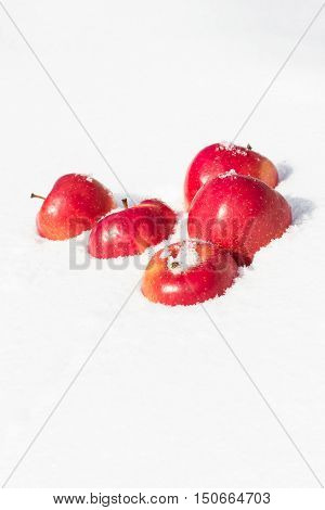 Bright red apples lying on white sparkling snow. Vertical orientation.