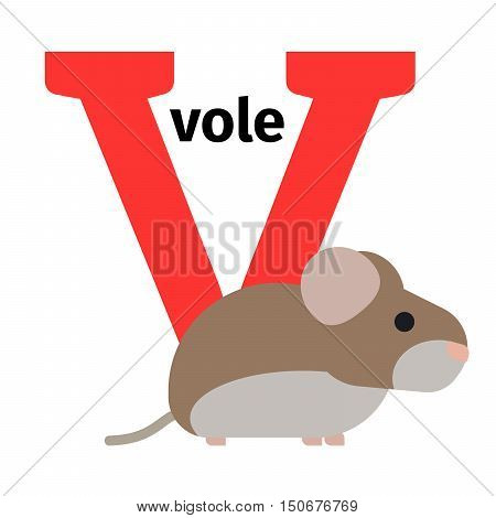English animals zoo alphabet with letter V. Vole vector illustration