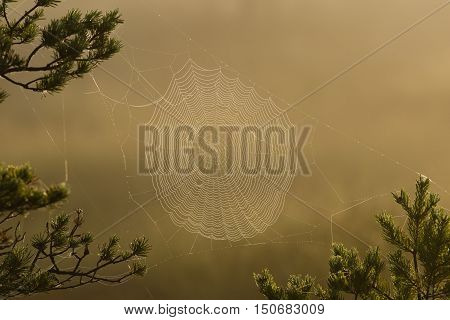 Spider web with dew drops in the morning