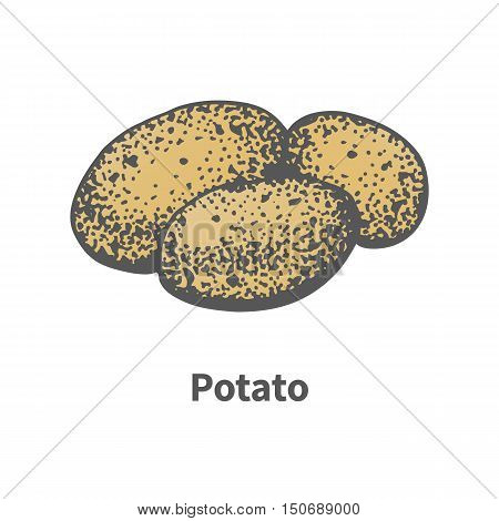 Vector illustration doodle sketch hand-drawn yellow ripe potatoes. Isolated on white background. The concept of harvesting. Vintage retro style.