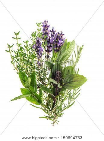 Fresh herbs rosemary thyme mint basil lavender. Food ingredients. Condiments. Spices