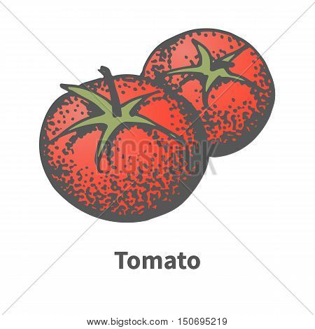 Vector illustration doodle sketch hand-drawn ripe red tomato. Isolated on white background. The concept of harvesting. Vintage retro style.