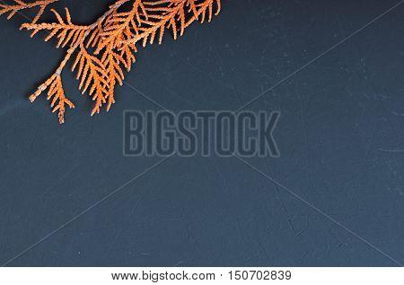 Dry orange thuja branch on blackboard with copy space