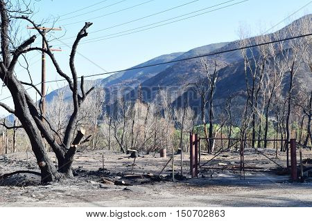Burned down property with just a gate still standing beside charcoaled trees and plants caused from a wildfire taken in Cajon, CA