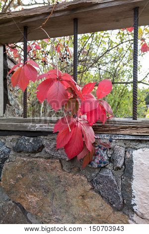 Branch Of Wild Grapes On A Background Of Stone Granite Wall
