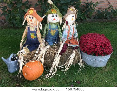 Three scarecrows dressed up for the Halloween trick or treaters.