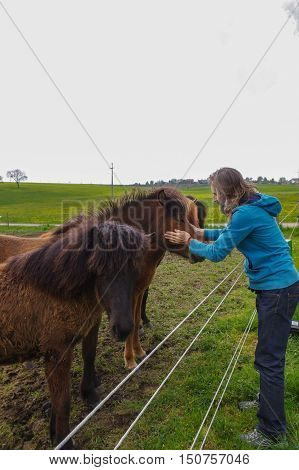 man speaking with horses on a meadow at summer time
