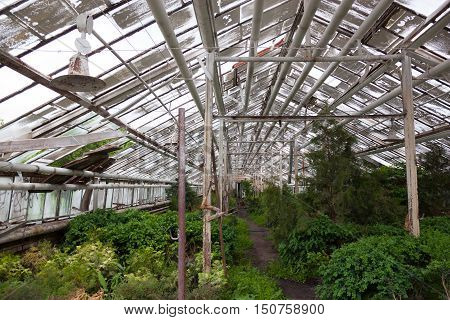 Growing different plants in the old greenhouse.