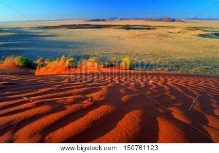 blurred landscape on Sunset in the Namib desert. national park Namib-Naukluft Namibia