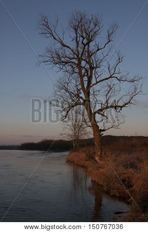 Lonely ree by the river bank at dawn