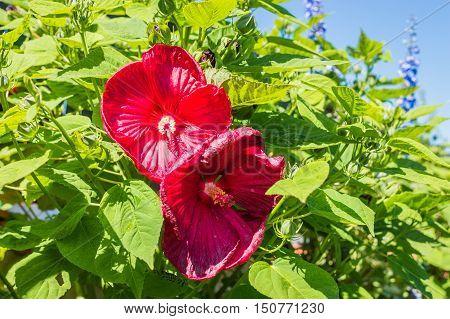 red beautiful flowers growing in the green garden