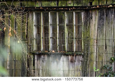 Abandoned wooden building in summer woodland, window