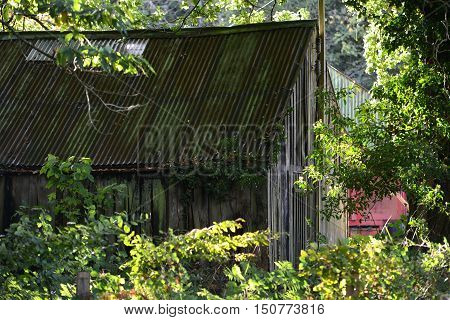 Abandoned wooden building in summer woodland hut