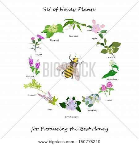 Honey banner with wild flowers wreath and bee. Illustration for honey products, farmers market, grocery, homeopathy, honey cosmetics and spa treatment. Vector eps10