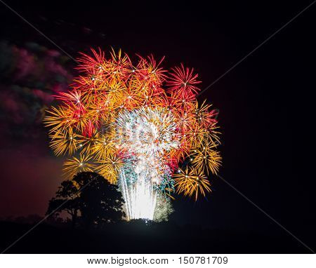 Tree silhouette with white, gold and red large burst.Spectacular fireworks at a national fireworks championship. Three of the UK best firework companies compete with a 10-minute firework display.