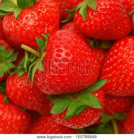 Large strawberries. Leaf, macro, nature, object, organic.