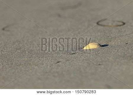 A small Cockle Shell on the sandbank