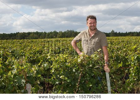 Vintner Examining The Grapes During The Vintage
