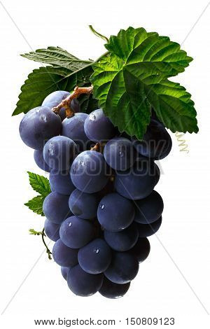Bunch Of Grape With Leaves, Paths