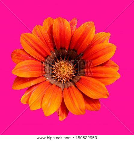 Abstract creative colourfull garden floral flower design