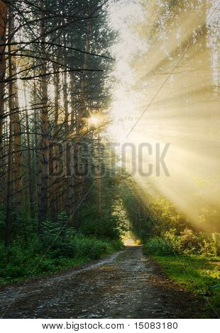 Sonnenaufgang in den nebligen Wald