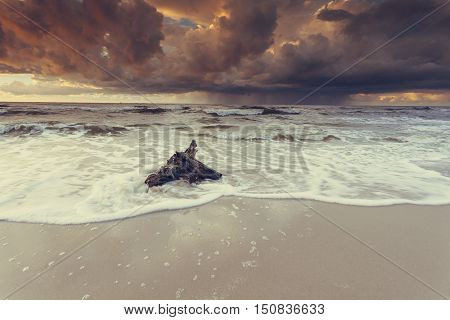 Dramatic Sunset And Tree Root On Beach