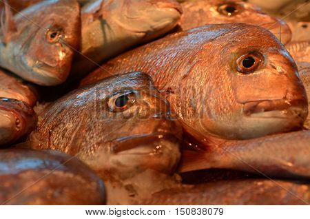 Seafood - Australasian Snapper
