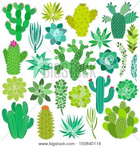 Cactus and succulent flower set. Hand drawn cactus plant collection. Vector