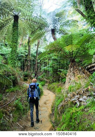 Woman Hiker Under Tree Fern on Abel Tasman Coast Track.  Abel Tasman National Park, New Zealand.