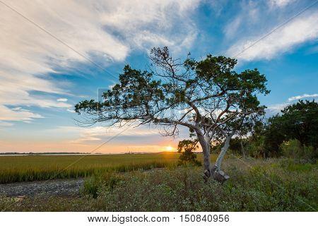 Tree at Sunrise on Tybee Island just outside Fort Pulaski