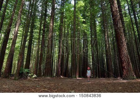 Child travel outdoors in Redwoods Rotorua New Zealand.