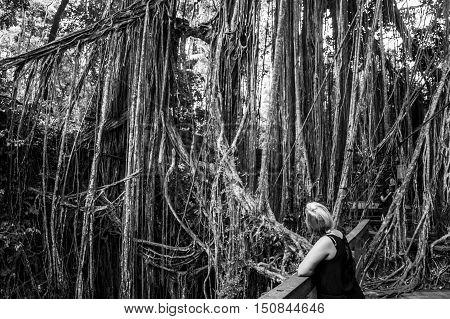 Bali Indonesia Ubud famous Monkey Forest Temple liana