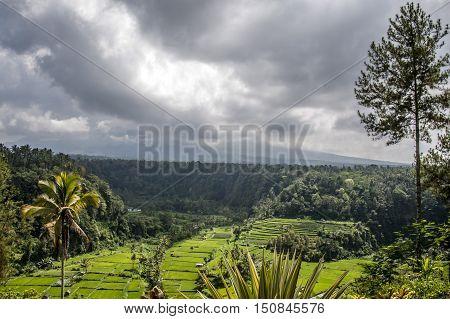 Rice terraces near mother temple Bali Indonesia Gunung Agung