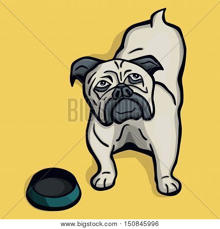 Young funny little hungry pug dog next to the empty bowl on yellow background
