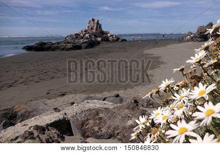 Flowers blossom on Sumner beach Christchurch a popular holiday destination coastal seaside in Canterbury Region Christchurch New Zealand.