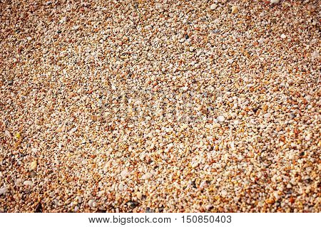 Abstract background consisting of small pebbles. Background with gravel