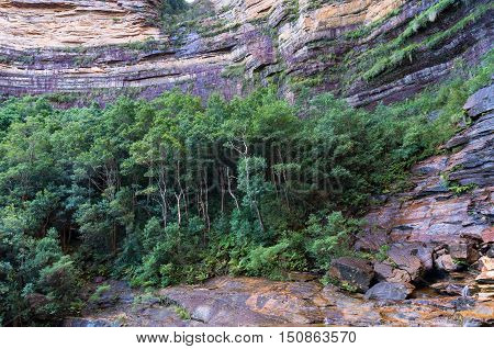 Wentworth Falls Gorge Forest