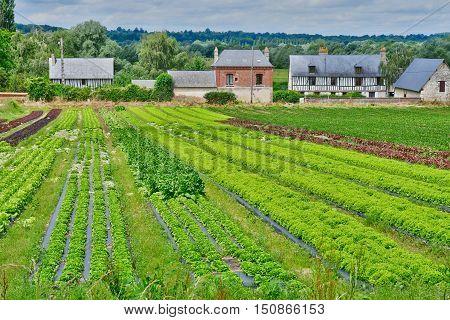 Saint Martin de Boscherville, France - june 22, 2016 : a market garden.