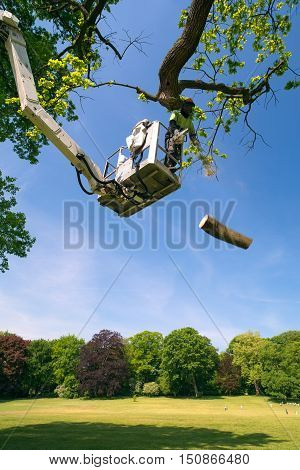 Tree surgeon at work on a cherry picker with the articulated hydraulic arm and cage cutting a large branch on a tree overlooking parkland with the falling branch suspended midair poster
