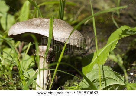 The mushroom in a grass waits when it is broken