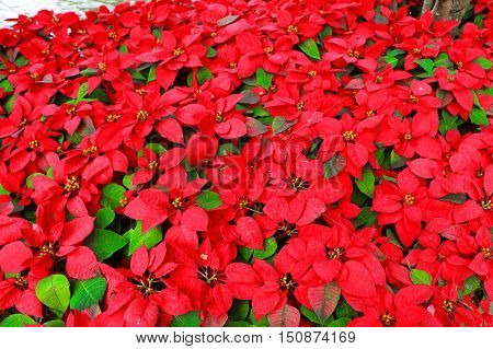 color red and green balckgrond flower leaf