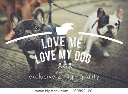 Love Me Love My Dog Carefree Conditions Ideas Concept